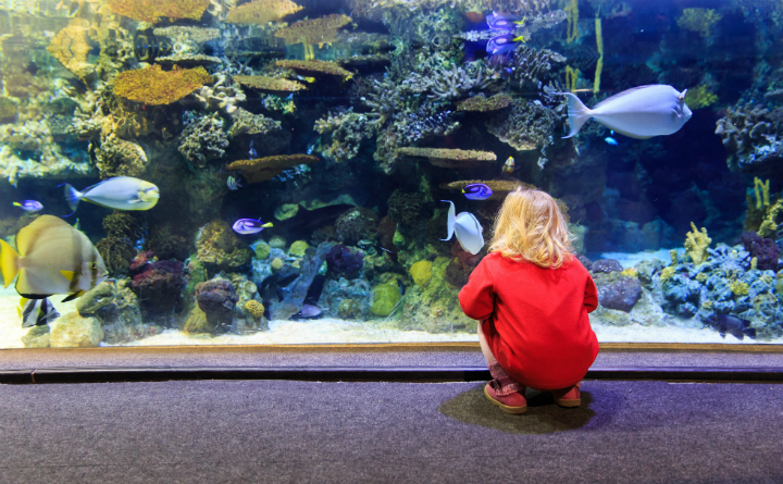 Kids - May 2017 - Aquarium